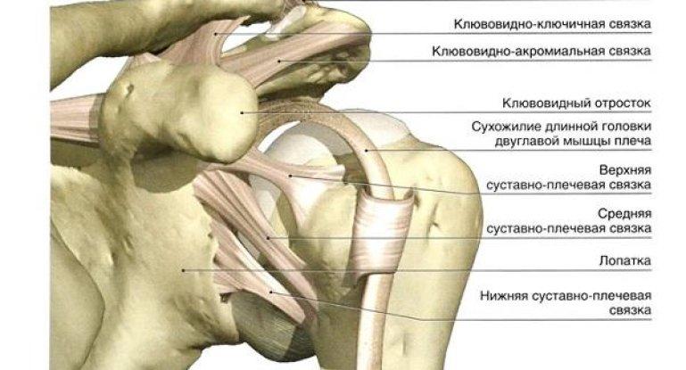 Разбираем анатомию связок плечевого сустава