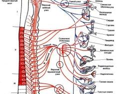 Расположение шейных узлов