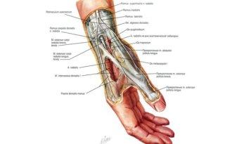 Народные средства лечения боли суставов пальцев рук