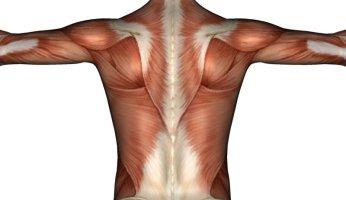Укрепляем мышечный корсет с помощью простых упражнений