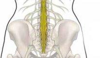 Поражение конского хвоста спинного мозга:…