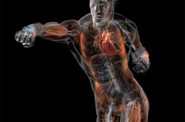 Рассматриваем анатомию суставов ног и рук