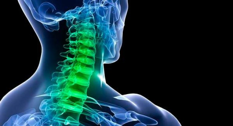Подробная анатомия шейных позвонков человека
