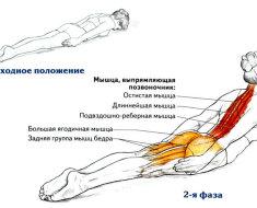 Какие мышцы работают в упражнении