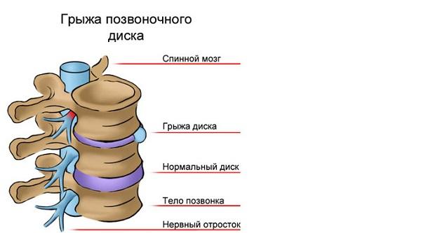 Строение челоеческого позвонка