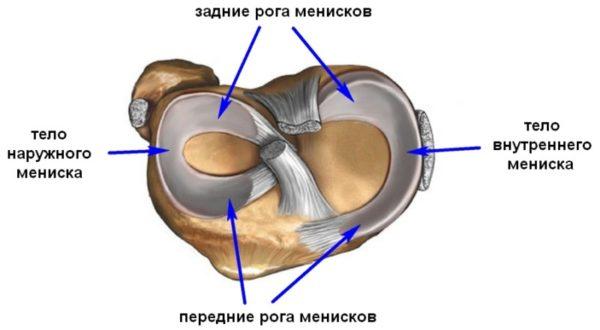 Изображение - Артроскопическая резекция медиального мениска коленного сустава meniski_kolena2-e1486956706804