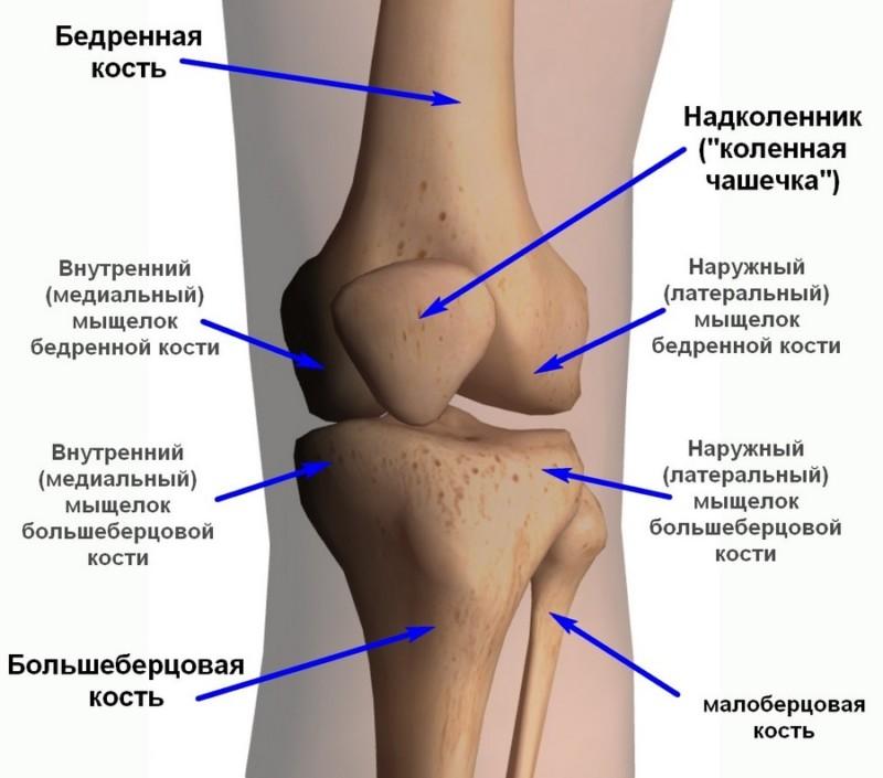 Схематическая демонстрацией костей
