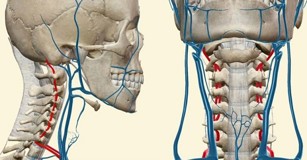 3D моделирование артерий