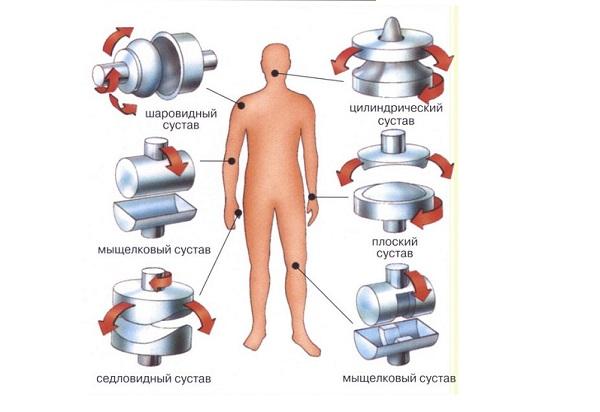 Виды и движения суставов