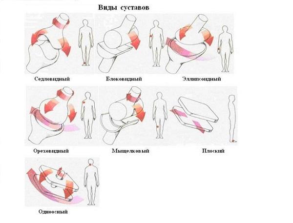 Изображение - Суставы и их типы vidy-sustavov