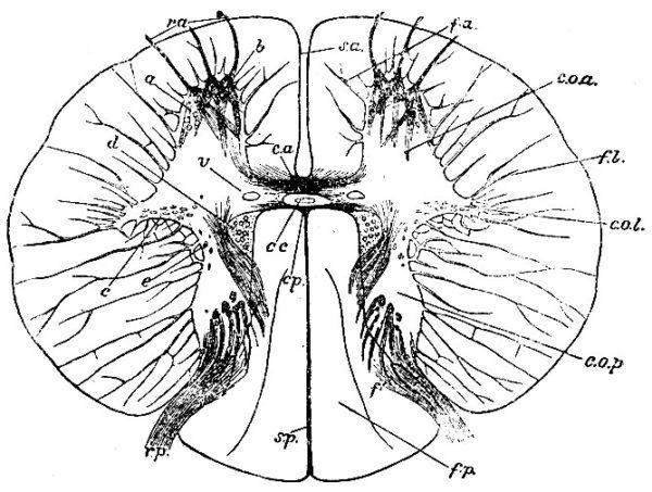 Внешний вид органа