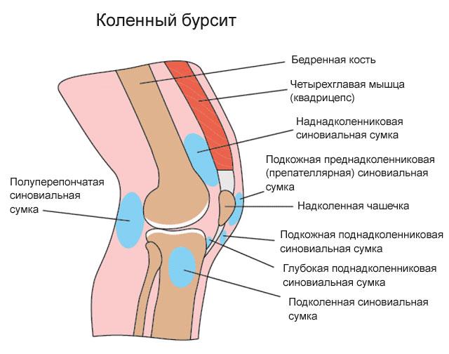 Изображение - В суставной сумке коленного сустава находится 262-01