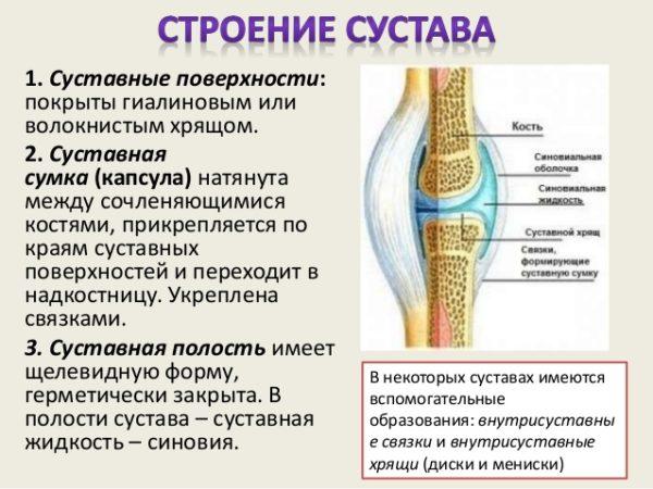 Изображение - В суставной сумке коленного сустава находится 27-638-e1496933063956