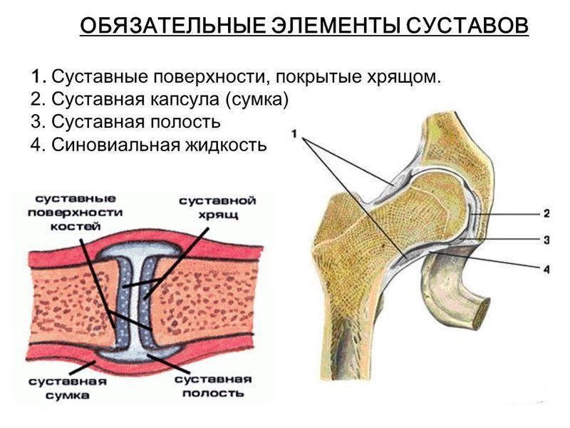 Изображение - В суставной сумке коленного сустава находится slide_16